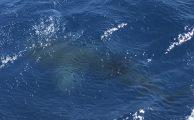 Familientauchtag mit Walhai