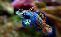 """Waschtag und """"Die Suche nach dem Mandarinfisch"""""""
